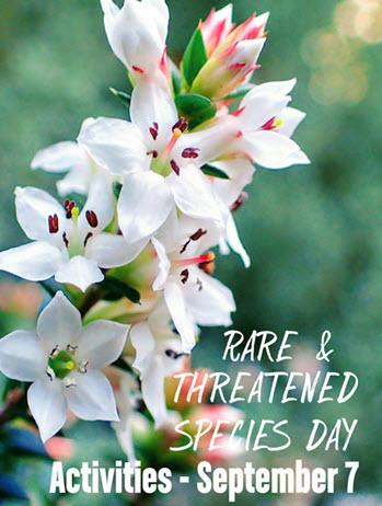 Rare and Threatened Species Day Epacris stuartii