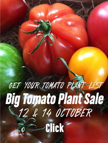 Big tomato plant sale link to plant list