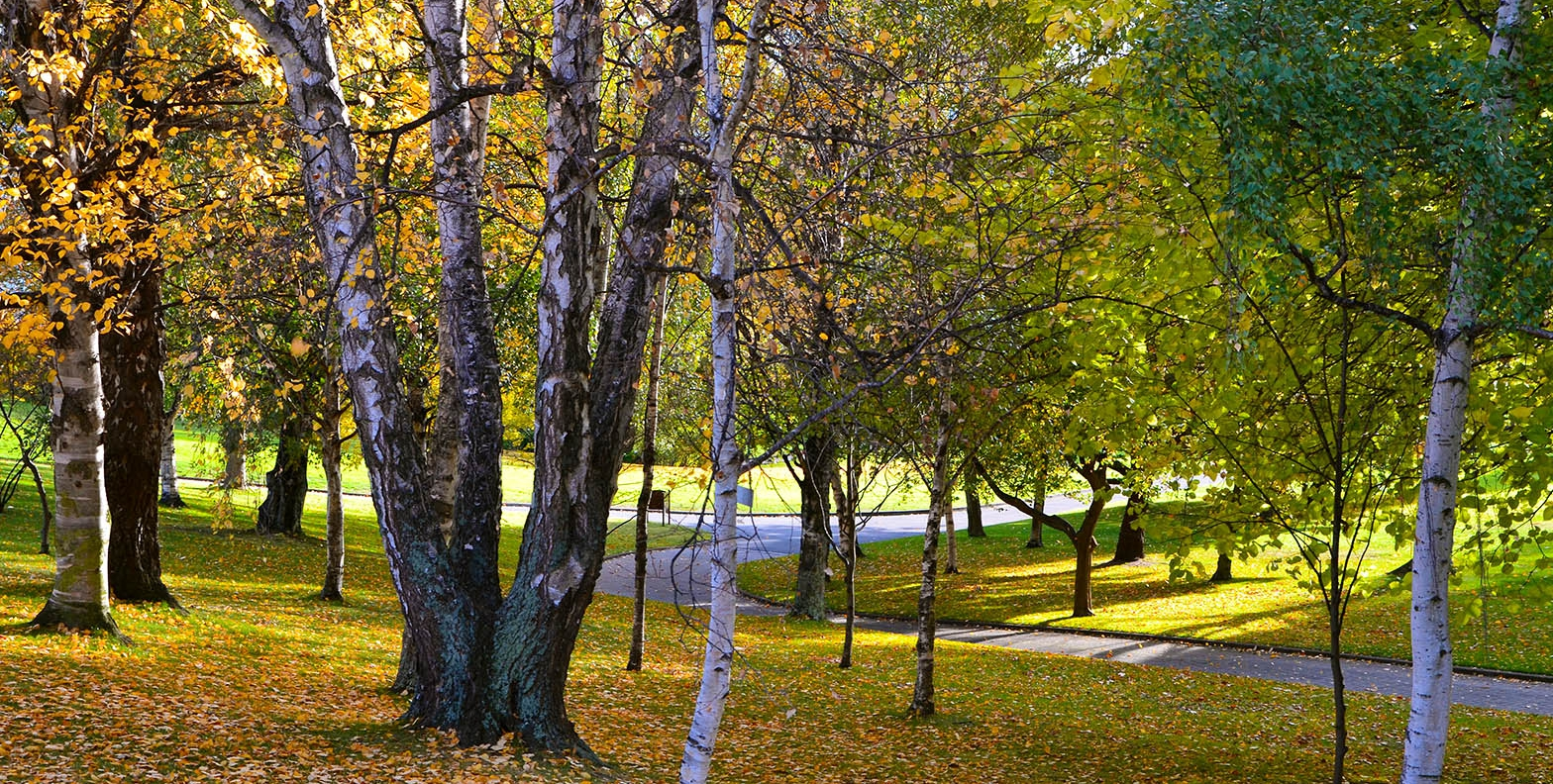 Royal Tasmanian Botanical Gardens with deciduous trees in colour and fallen leaves on the ground - Autumn 2013