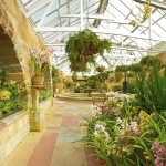image of the Conservatory with large areas of Cymbidium orchid displays