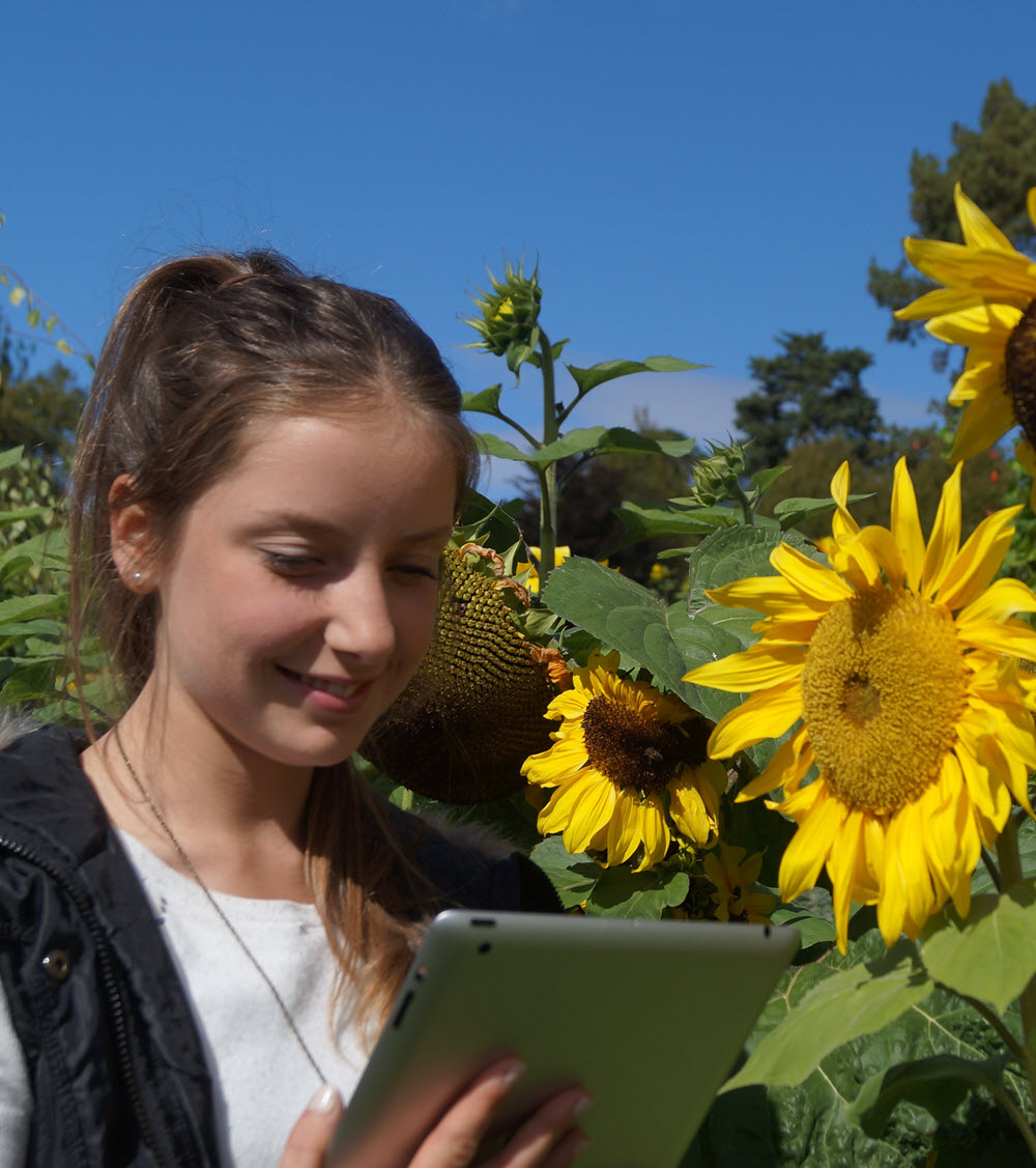 Girl in sunflowers with mobile device