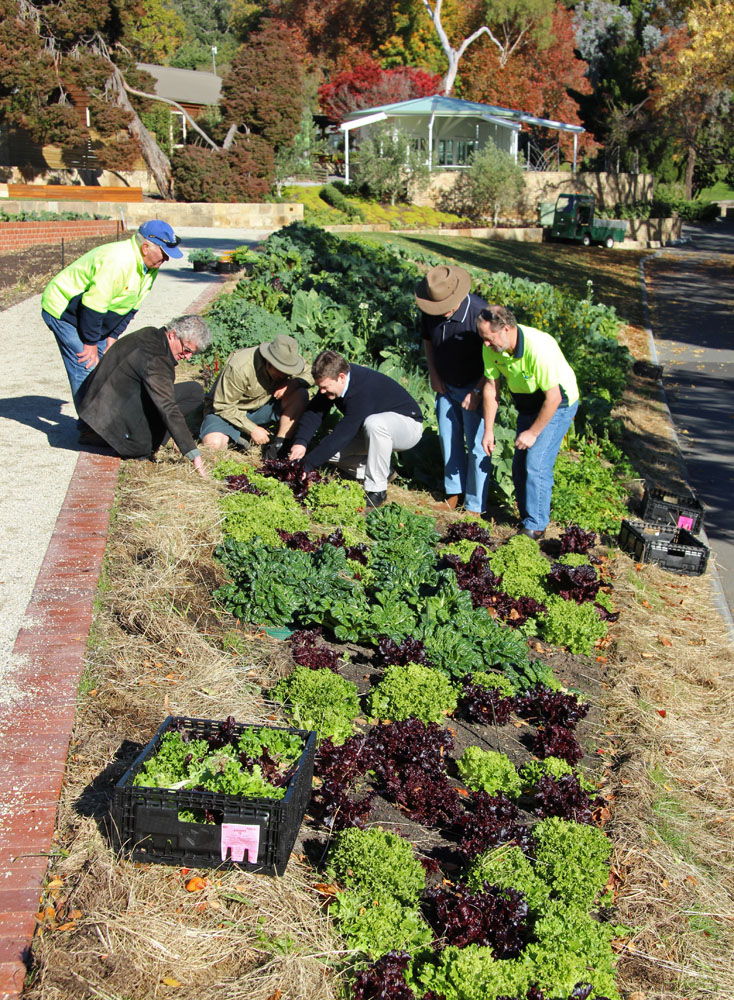 Work in the Tas community food garden