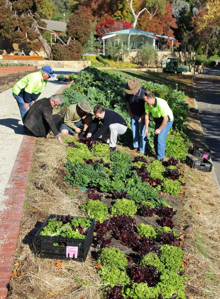 Work in the Tas community food garden