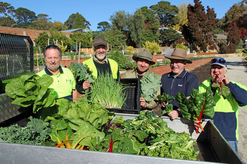 Harvesting food in the Tas Community Food Garden
