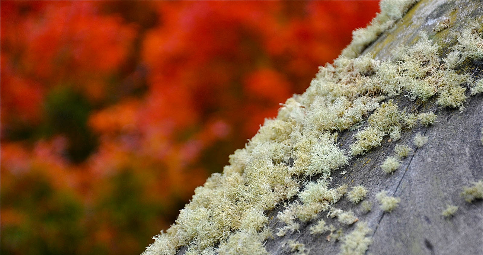 Lichen on the Bird Table