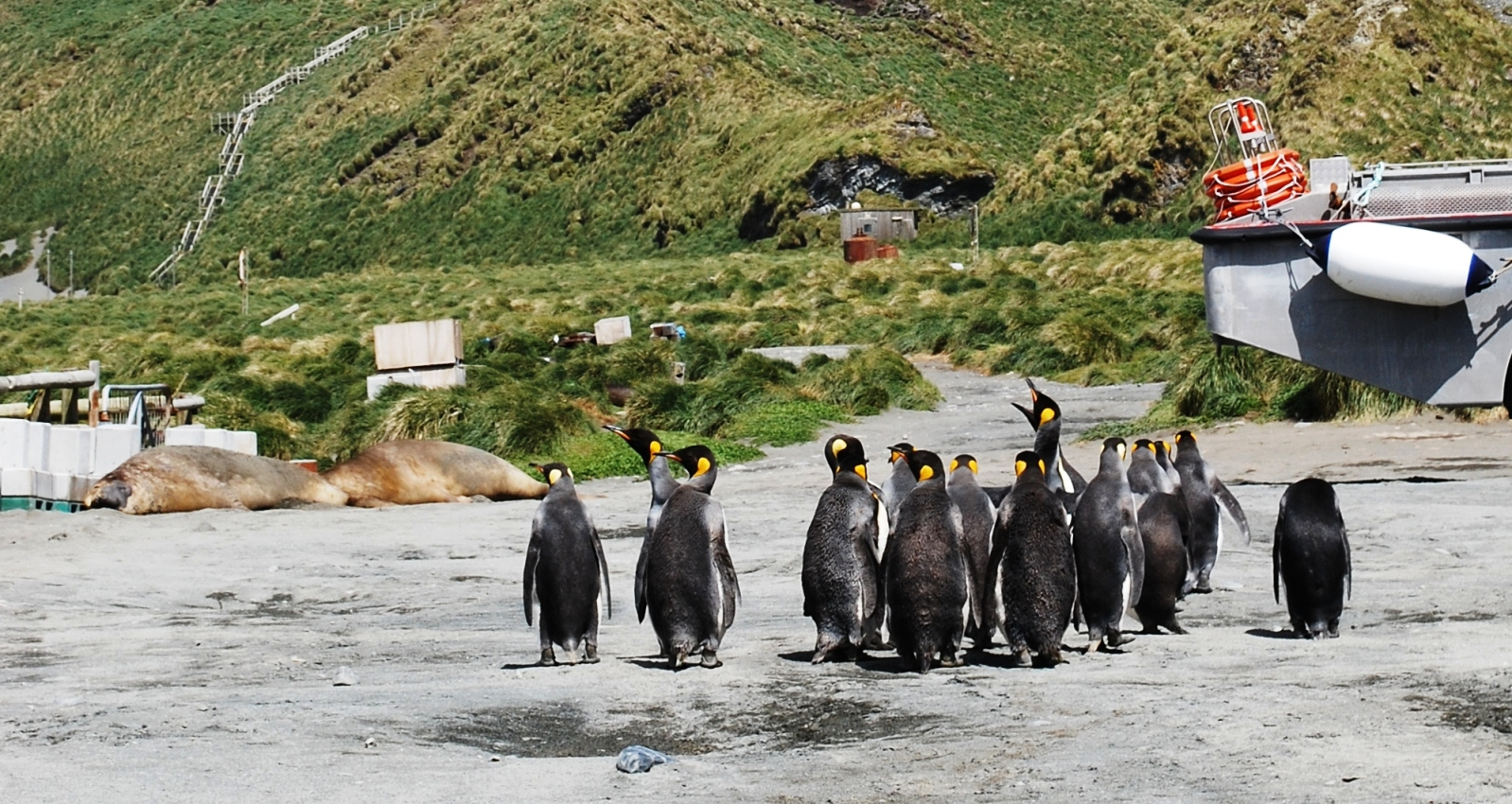 a group of 17 Penguins on macquarie island