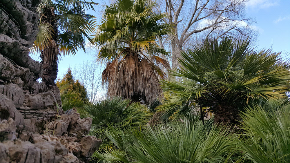 image of the Palm area across the many canopies of palms