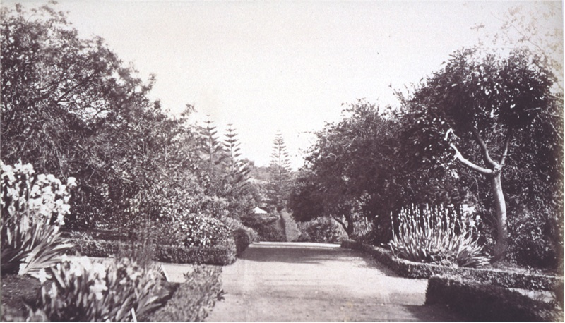 image of botanical Collections, crossroads walkway in the Botanical gardens