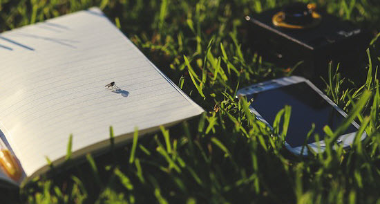 image of fly on book with mobile phone in grass next to the book
