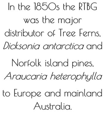 In the 1850s the RTBG was the major distributor of tree ferns  Dicksonia antarctica and Norfolk island pines Araucaria heterophylla to Europe and mainland Australia.