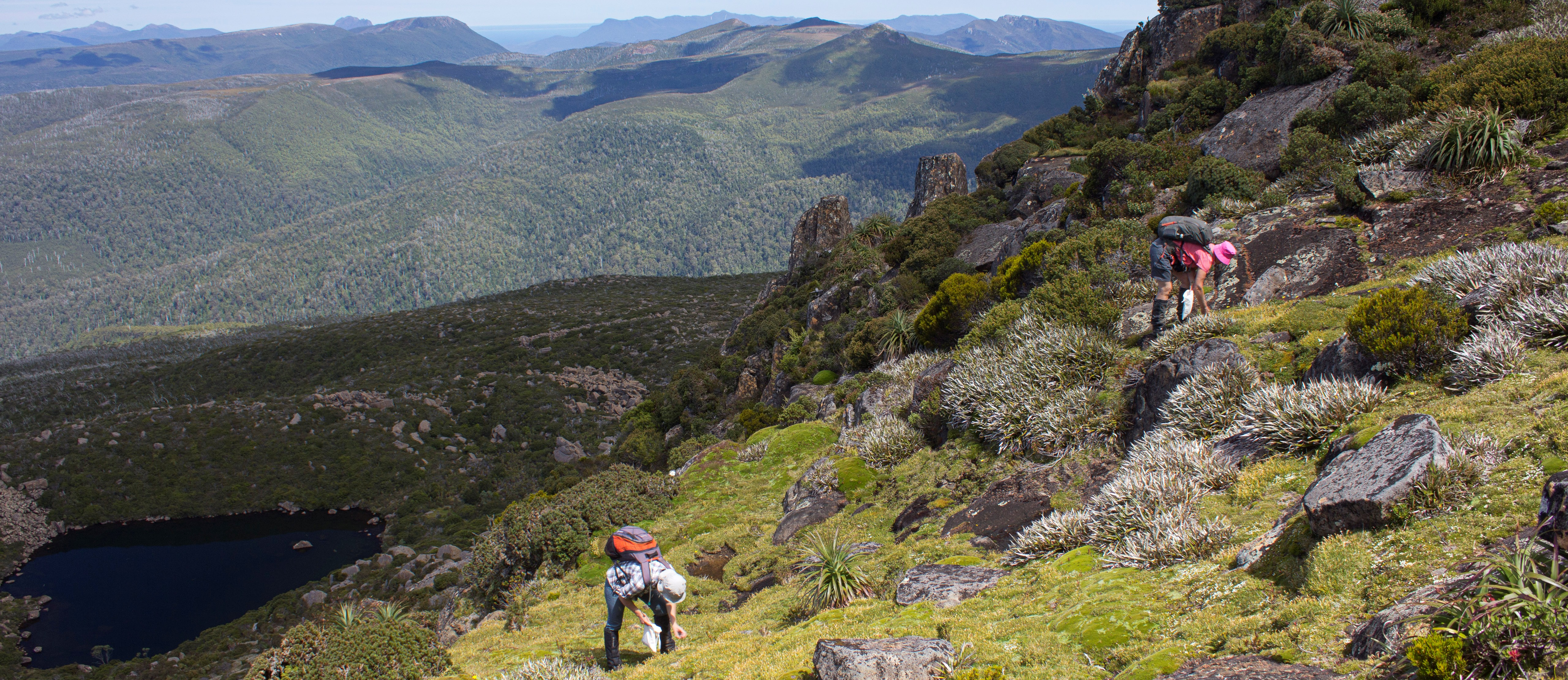 image of person Collecting seed and researching activities in the central Tasmanian highlands. expansive mountain views behind