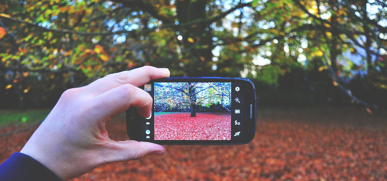 Image of a hand holding a mobile phone and taking a picture of a tree