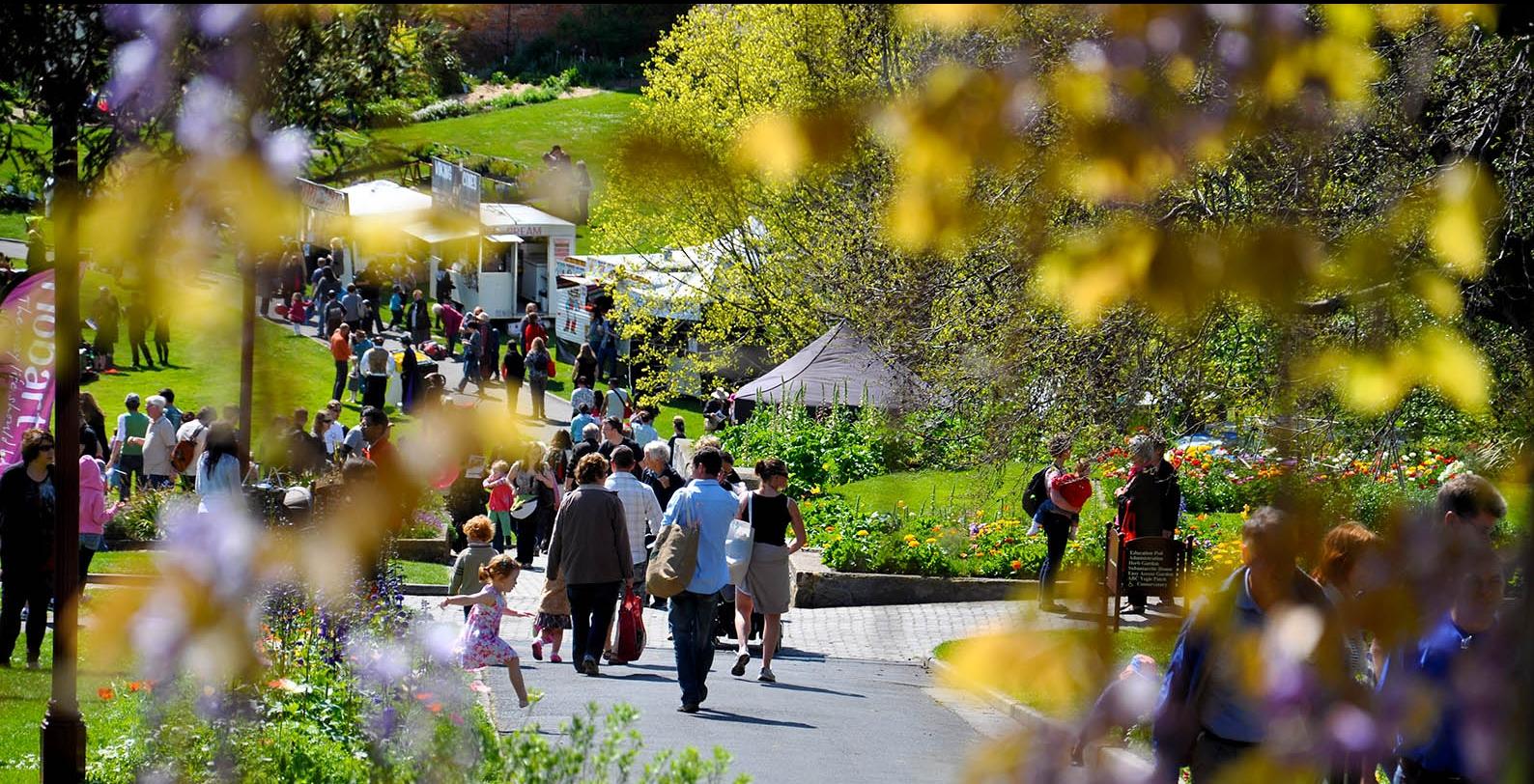 Spring Community Festival 2011- Wisteria View