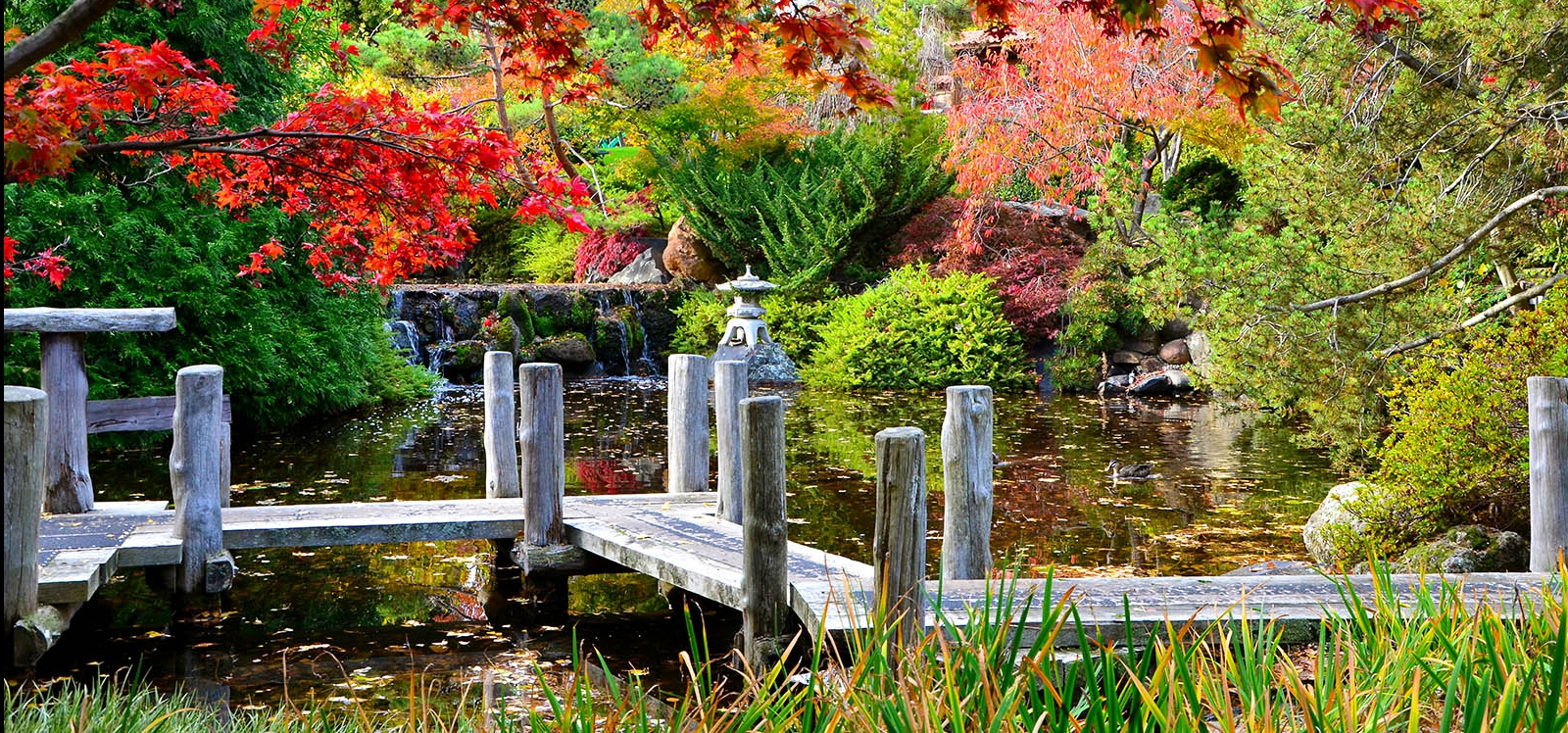 Zig Zag Bridge, Lower Pond - Japanese Gardens, RTBG