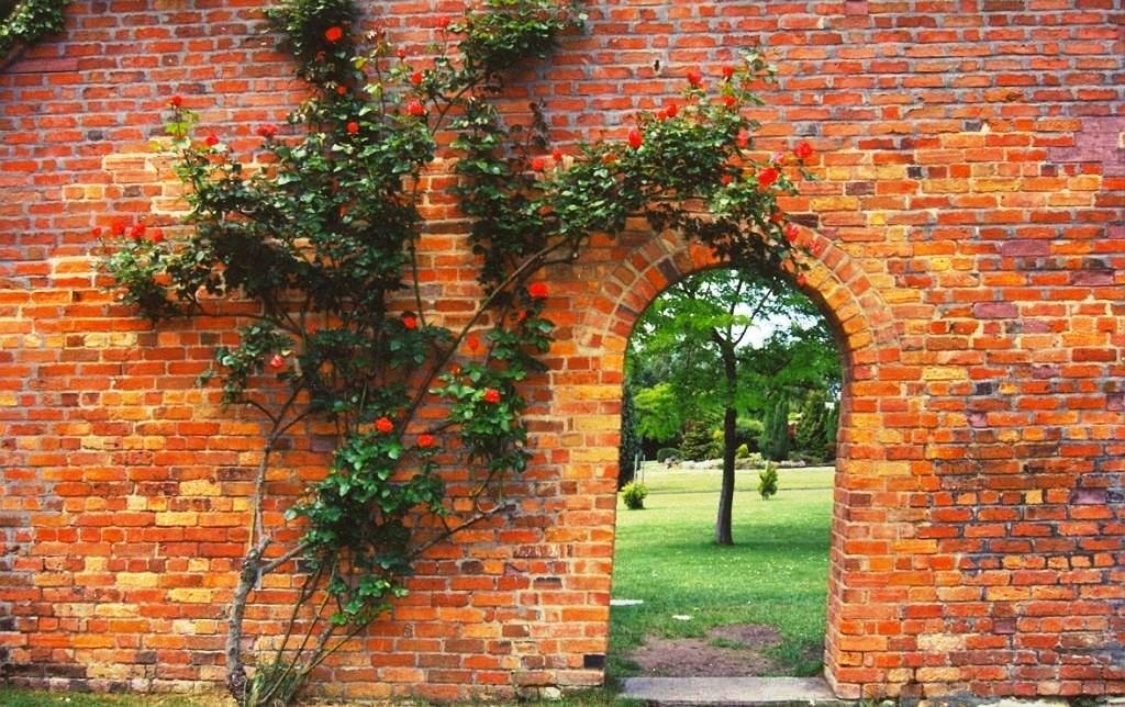 Eardley Wilmot wall with climbing rose