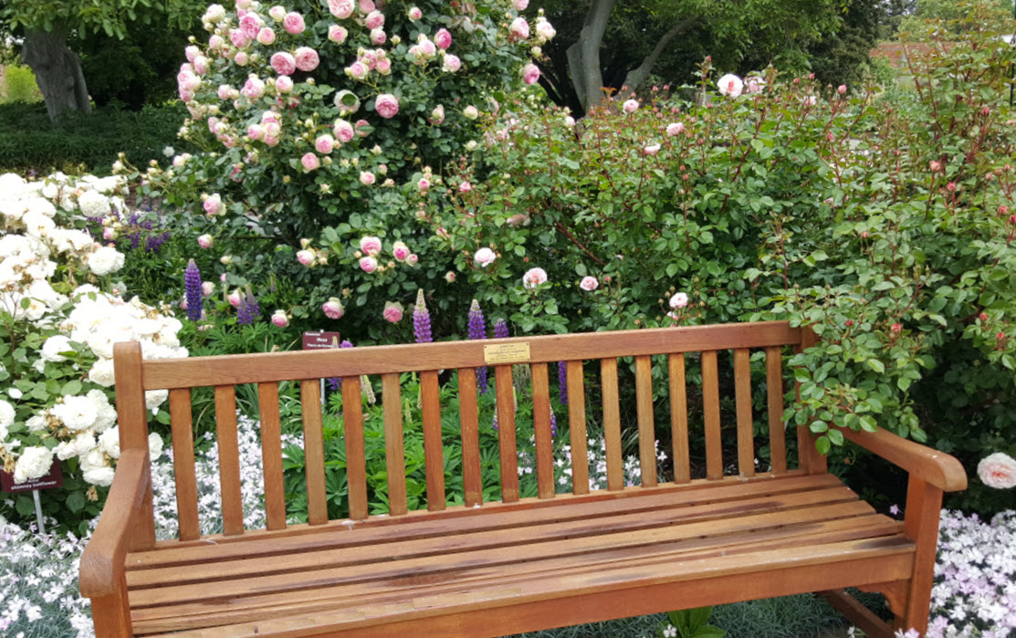 Bench in the roses mixed border Nov 2015