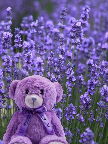 Bobbie Bear in the Lavendar