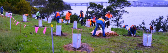 Derwent river Foreshore restoration work being carried out by individuals made up of gardens staff and students, volunteers from community.