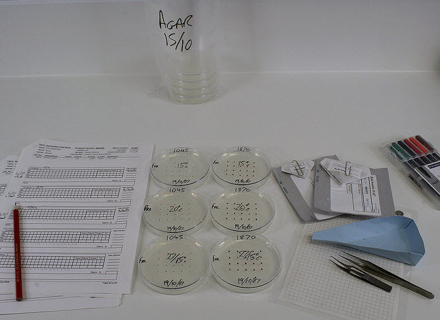 Standard items involved in setting up a germination test. Pencil, testing sheets, petri dishes of 1% agar, seed packets, seed tray, forceps and marker pens.