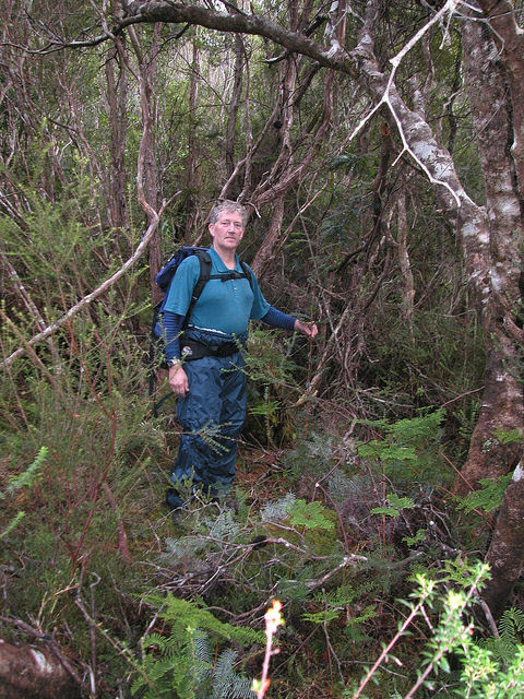 RTBG Staff Alan Macfadyen in L.tasmanica habitat. Photo – N.Tapson