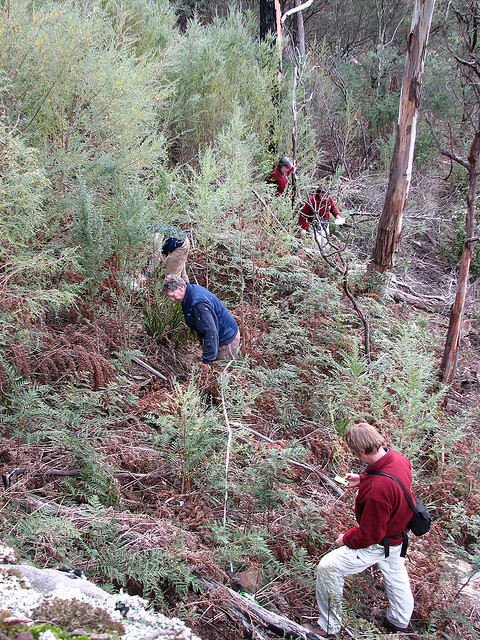 RTBG staff mapping and collecting cuttings at Bluff River Gorge