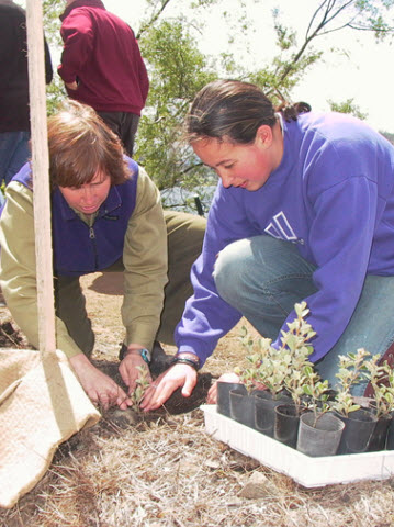claremont college student planting natives on the foreshore