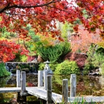 Japanese Garden looking out over the zig-zag bridge and lower pool with red Japanese maples over the top