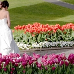 wedding couple strolling through the tulips in the gardens