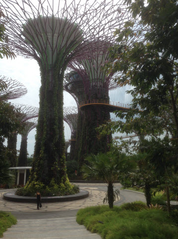 Gardens by the Bay super trees
