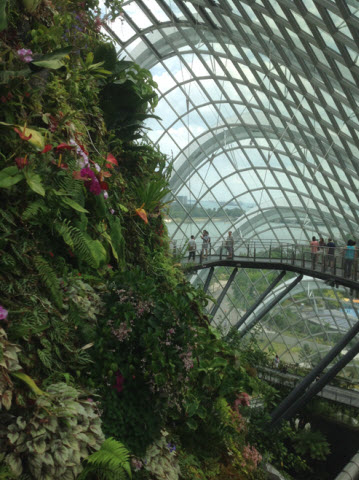 Gardens by the bay mist mountain in cloud dome, half way up the mountain with the suspended walkway in the background