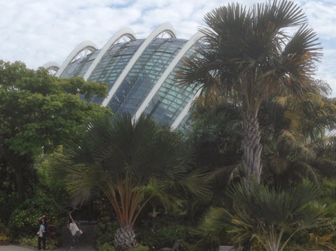Singapore gardens by the bay Dome looms over the palm plantings in the Gardens