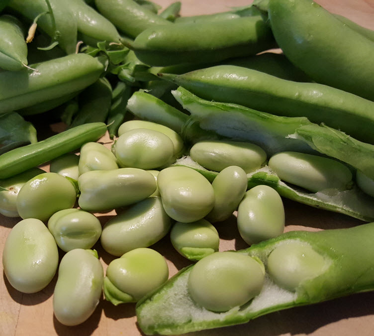 Close up of sugar snap peas and broad beans in and out of the pod