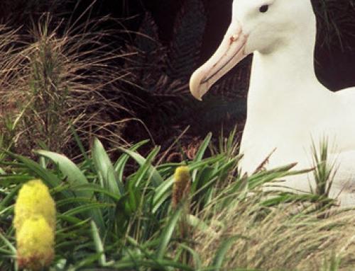 My Subantarctic Journey