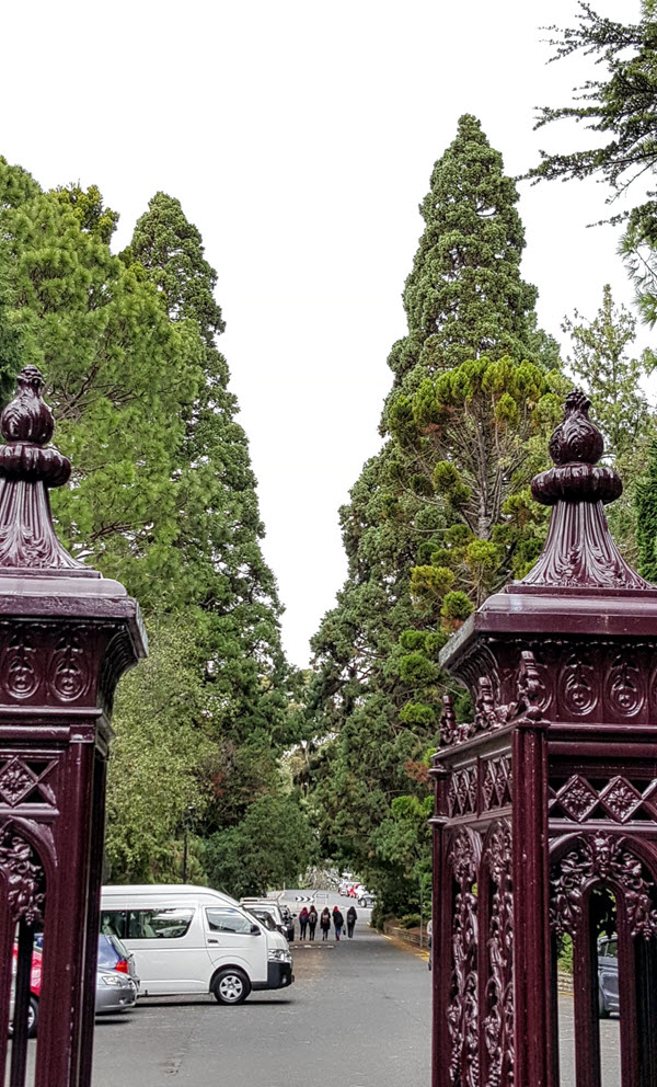 Towering giant sequoia sentinals guard the entry to the Hobart Botanical Gardens