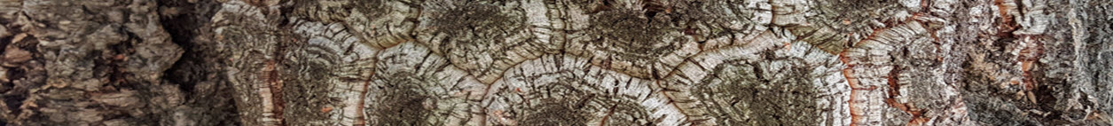 Cork oak bark slim