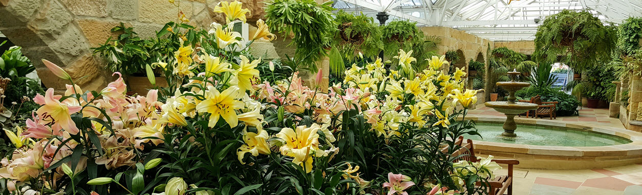 liliums-in-the-consevatory