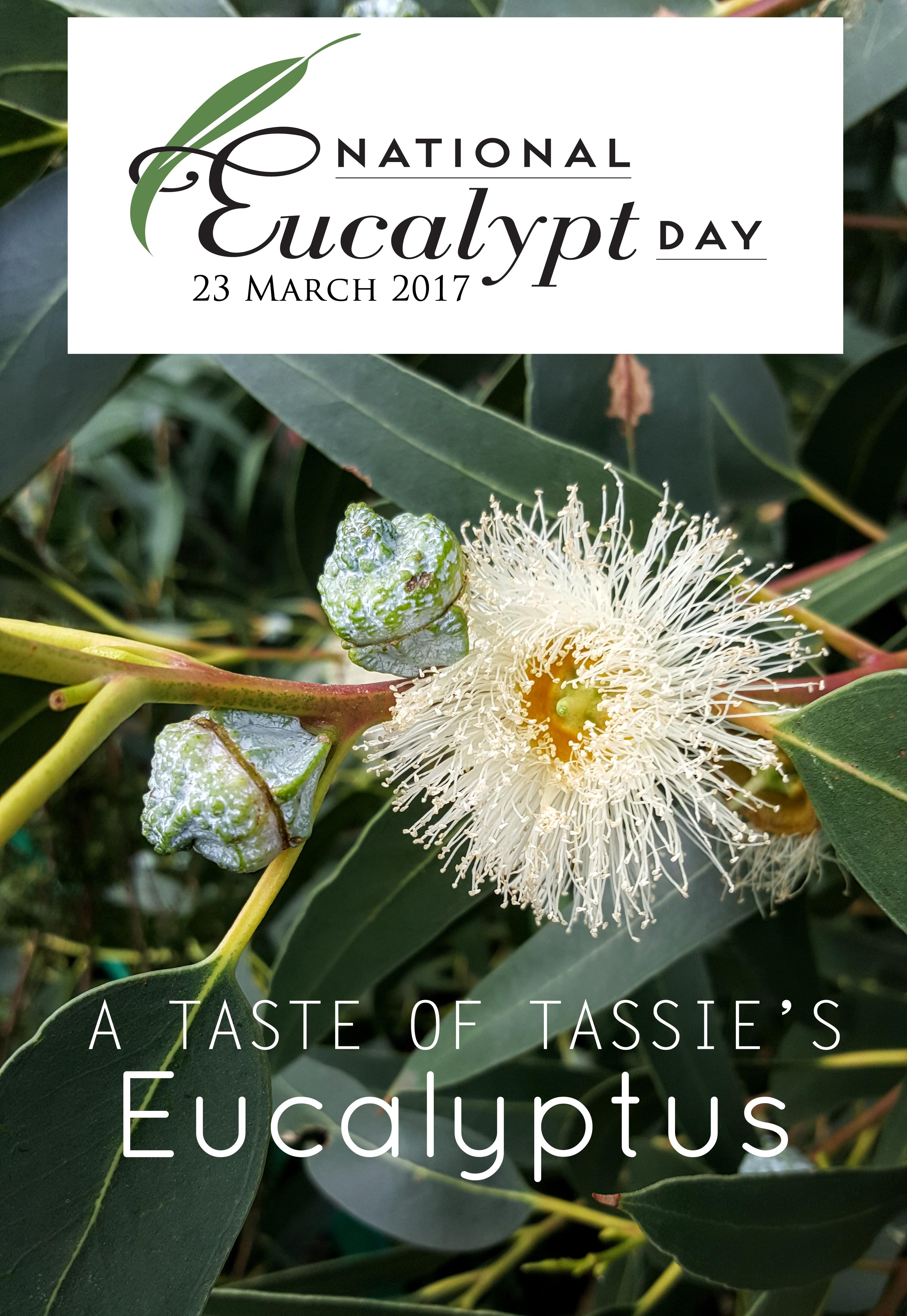 March the 23rd is National Eucalyptus Day