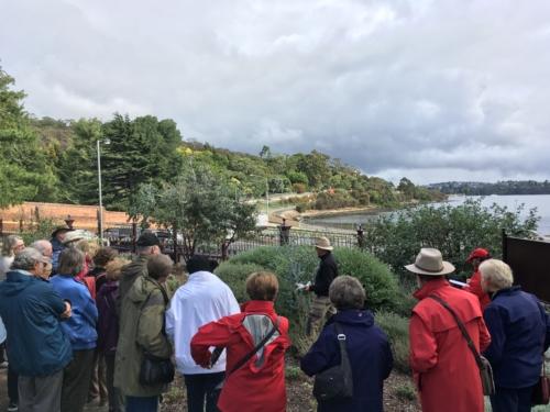 Investigating the Eucalyptus gunnii Subsp divaricata (Miena cider gum)