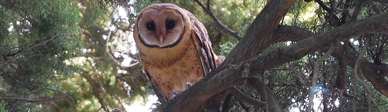 Owl-in-the-Garden