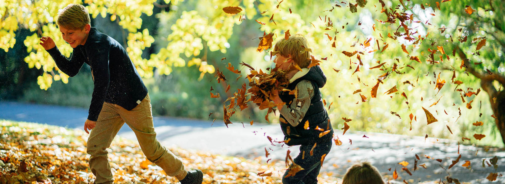 Boys playing in Autumn leaves at Royal Tasmanian Botanical Gardens